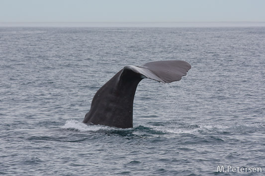 Kaikoura Whale Watching Tour